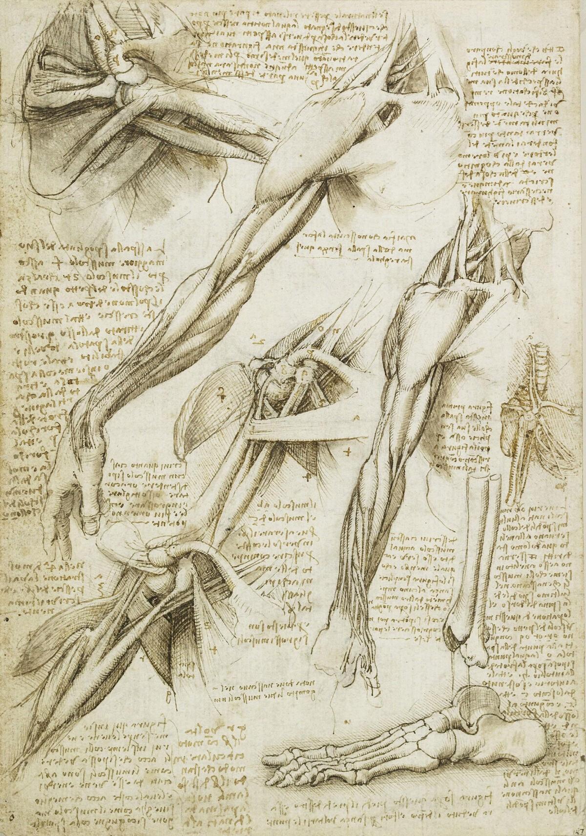 Human anatomy diagram drawings and notes