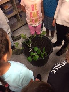 sister plants